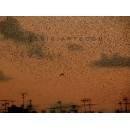 The exeption - digital print